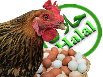 halal eggs