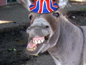 Donkey Britain
