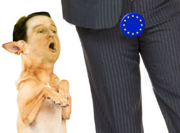 cameron-dog-begging-happy-eu masters-sitting-up-paws-up-happy-expression-close