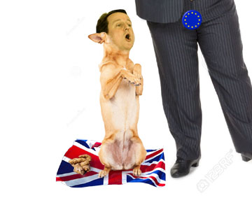 cameron-dog-begging-happy-eu masters-sitting-up-paws-up-happy-expression-open