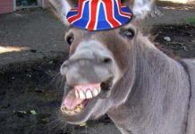 Donkey Britain eu referendum