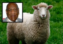 Bill Cosby Sheep