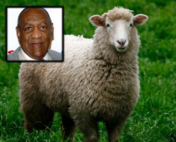 Bill Cosby Sheep