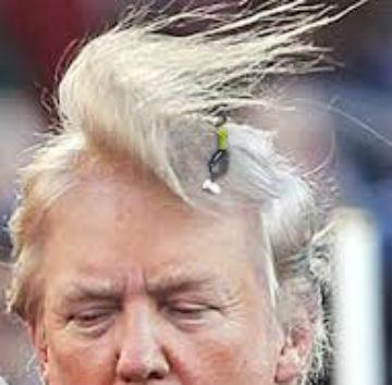 chump toupee wind