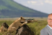 lion justice