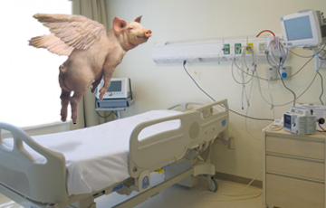 hospital-room-pig