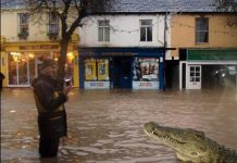 crocodile_cockermouth-main-st-at-3-00