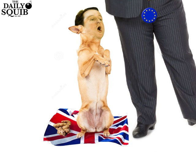 cameron-dog-begging-happy-eu-masters-sitting-up-paws-up-happy-expression-640a