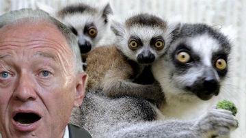 madagascar_lemurs_ken