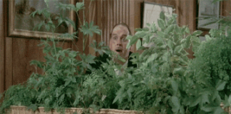 john-cleese-hiding