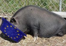pig-trough-eu