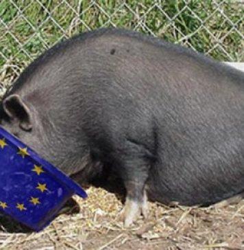 pig-trough-eu