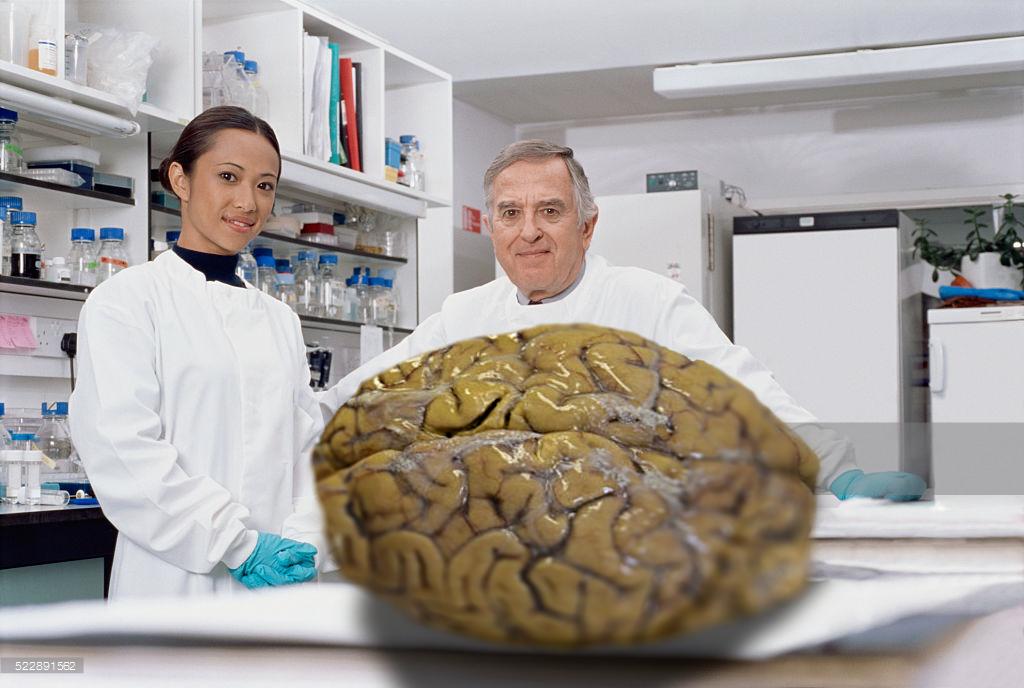 lab brains