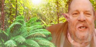 weinstein jungle celebrity