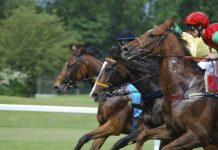 racecourse_horses_