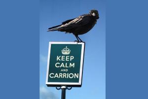 KeepCalmAndCarrion-barbarossa - b3ta