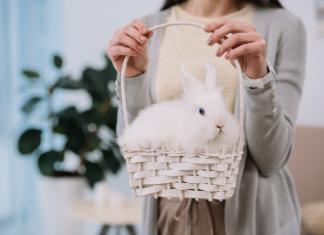 Bunny boiler EU