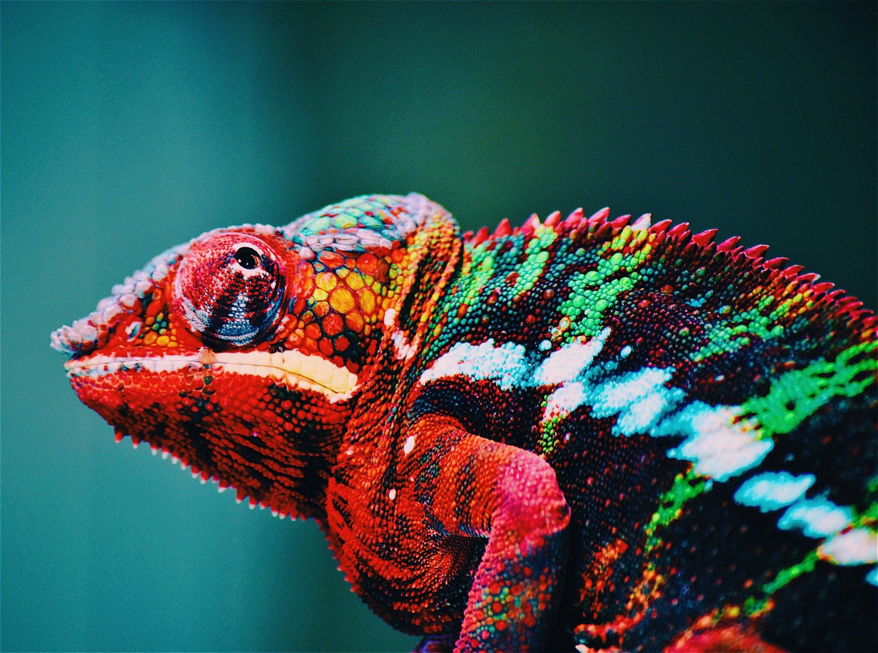 chameleon misconceptions true