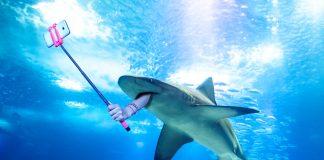 Underwater selfie shark