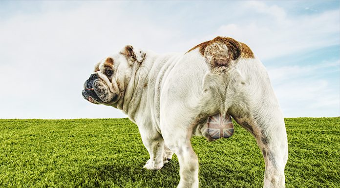 bulldog-britannia-brexit day