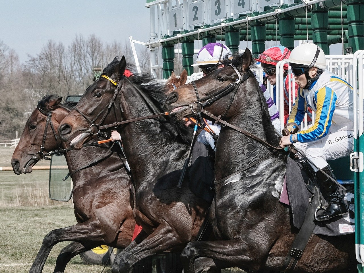 horse racing cheltenham festival