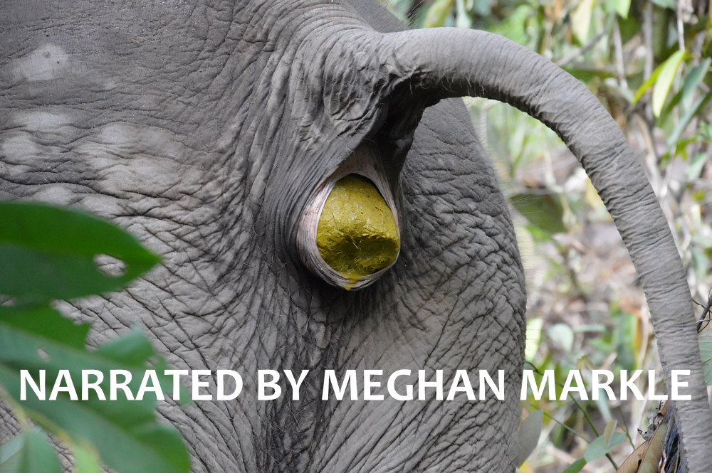 Narrated by meghan markle