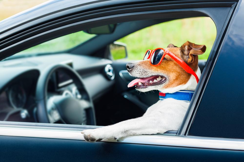 dog car steering wheel