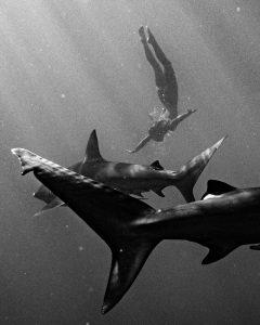 sharks2 marisa