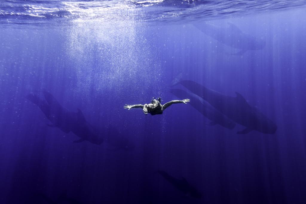 pilot-whales1