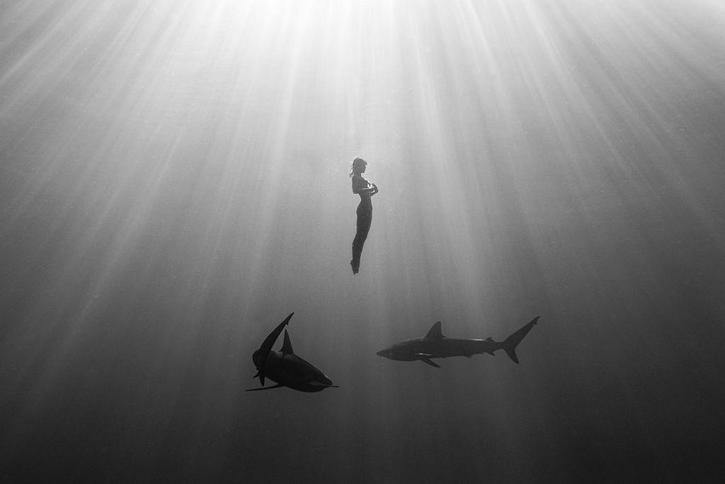 sharks MARISA PAPEN