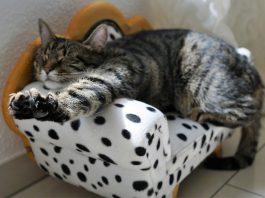 cat-2360863_1280