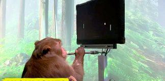 monkey playing pong