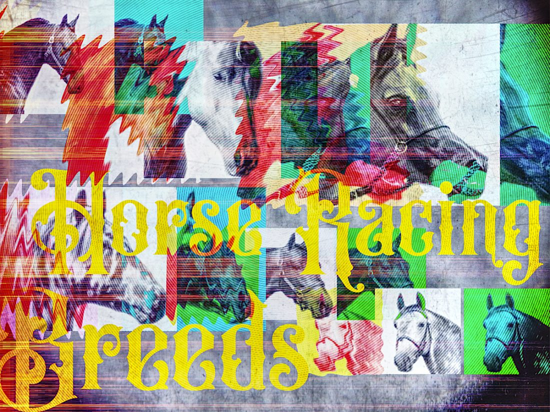 horse racing breeds