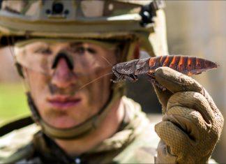 Joe Biden Cockroach Rescue