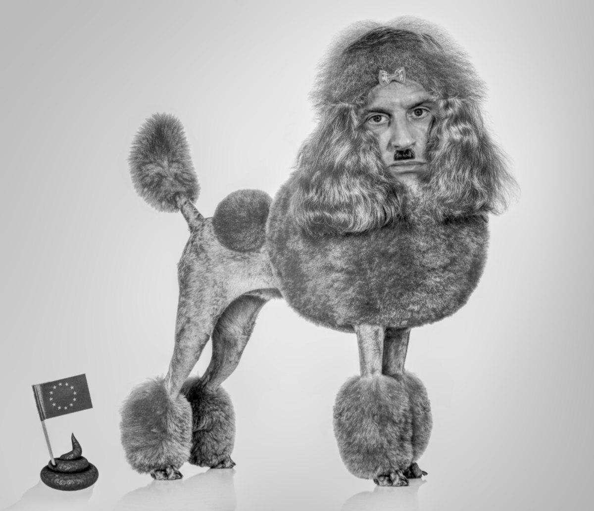 macron toy poodle